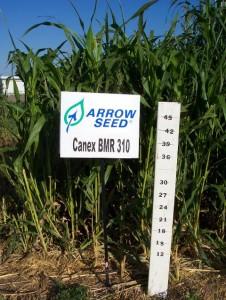 canex BMR (2)