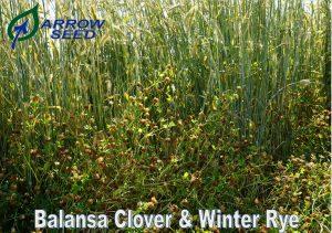 Balansa & Rye
